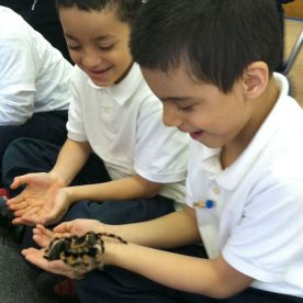 Spiders: Heroes or Villains - Learning Expedition Spring 2012